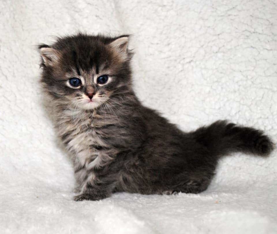 Menschenbezogene_schöne_Katze